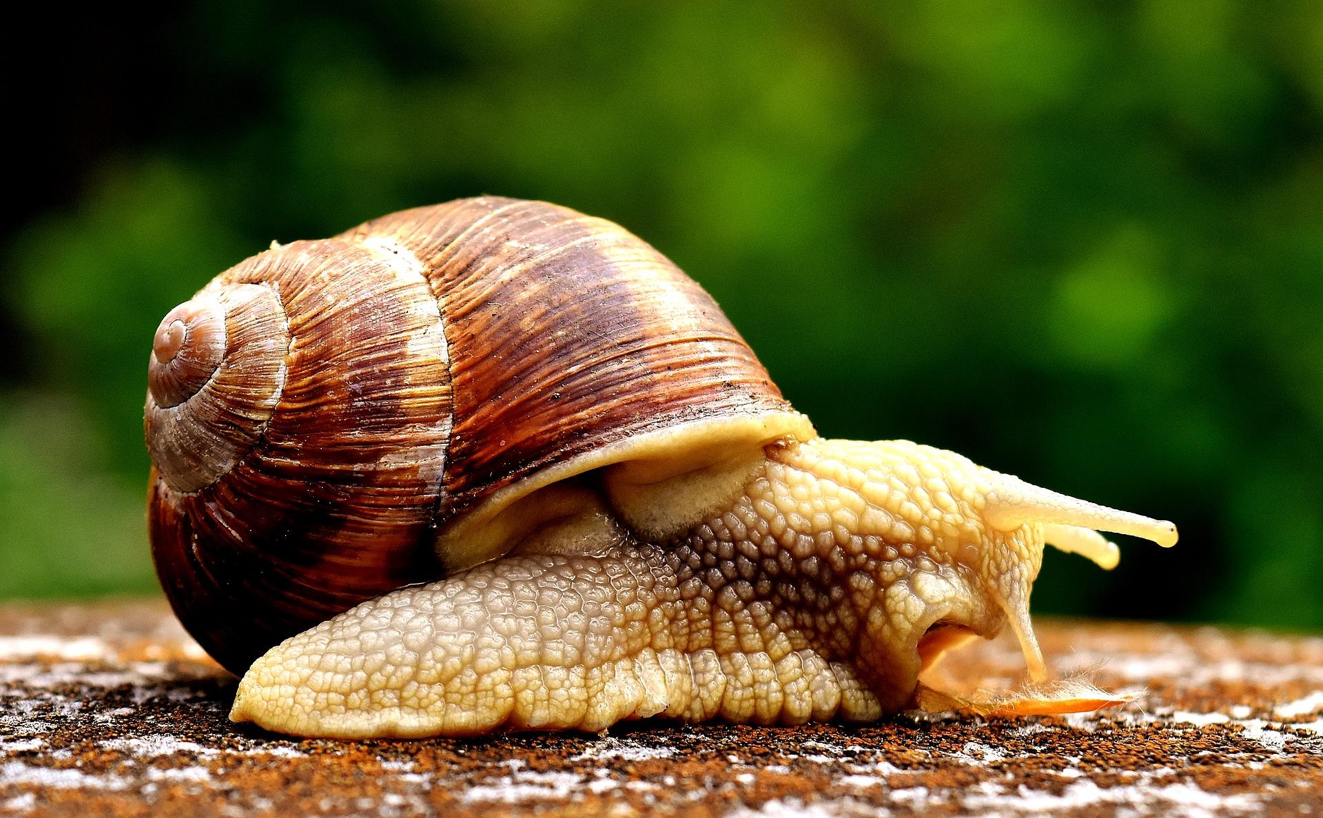 transformation des escargots