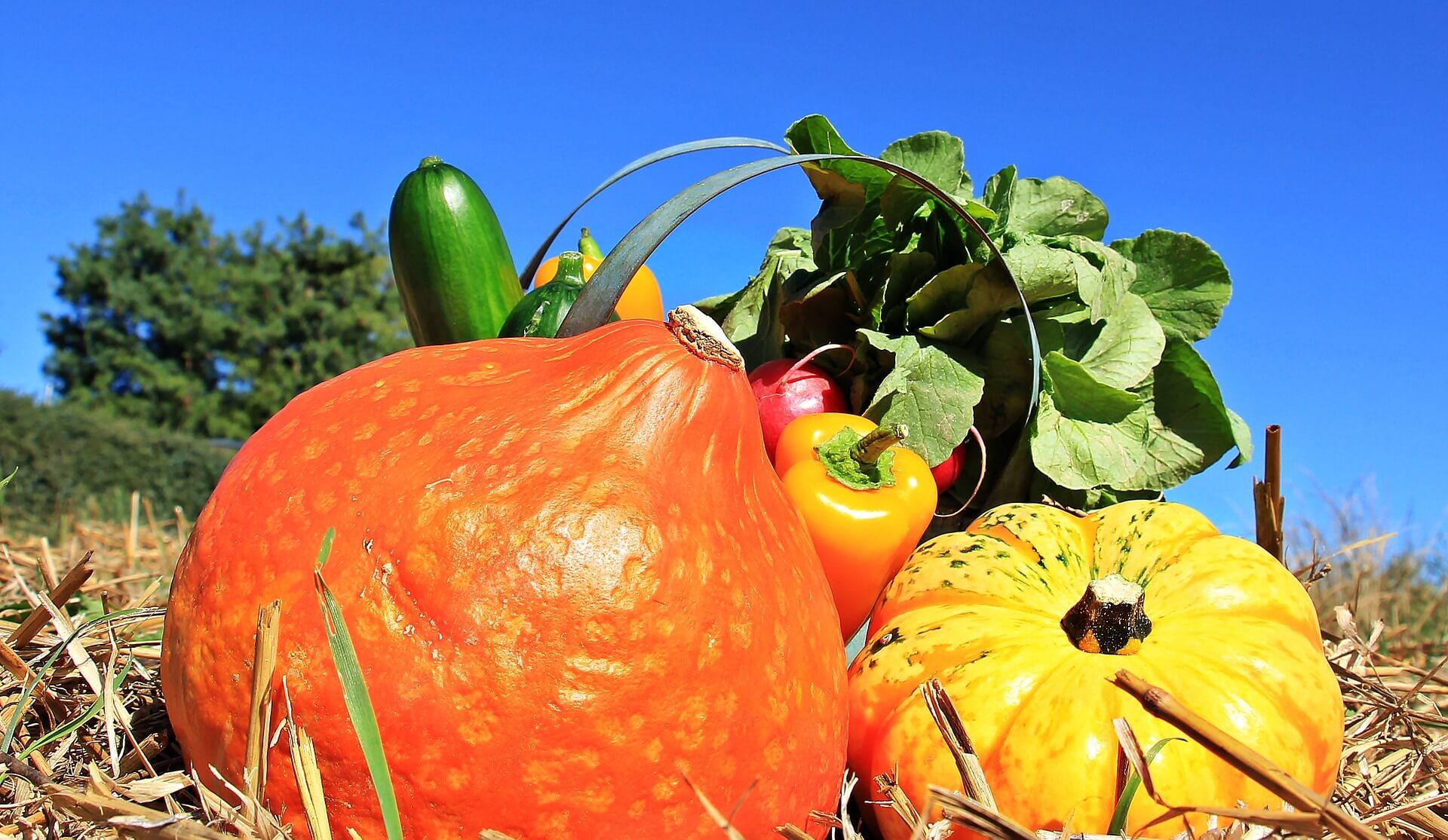 transformer ses légumes et vendre en circuit court
